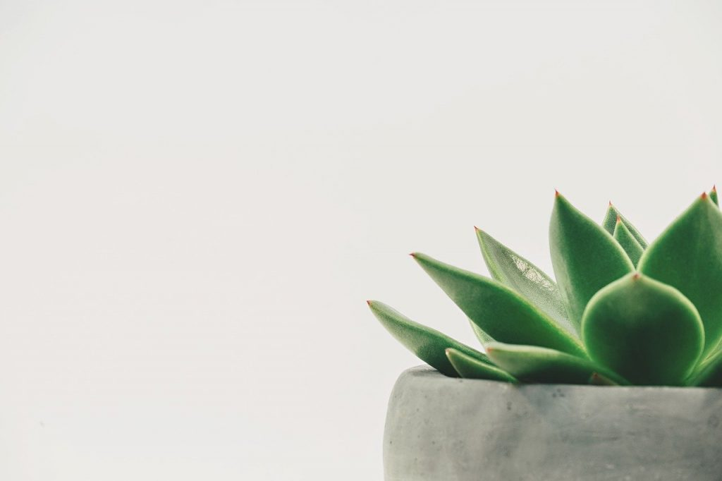 suculent plant minimalistic style
